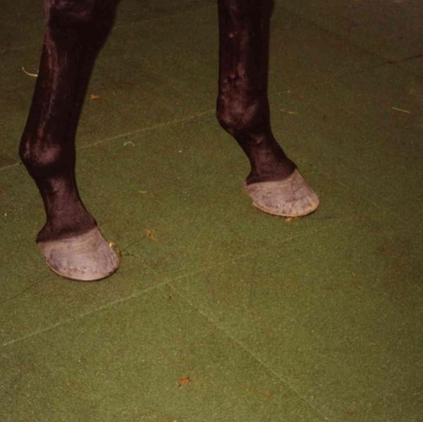 Dalle caoutchouc pour box à chevaux 50x50x2,5 cm couleur verte, le M2