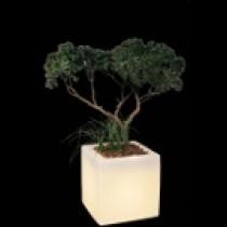 Cube lumineux 50 x 50 x 50 cm, l'unité