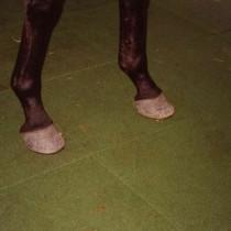 Dalle caoutchouc pour box à chevaux 50x50x4 cm couleur verte, le M2