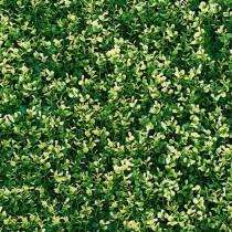 Mur Végétal Artificiel Buis Marbré 80 mm 1m x 1m