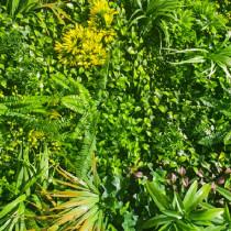 Mur Végétal Artificiel Jungle 80 mm 1m x 1m