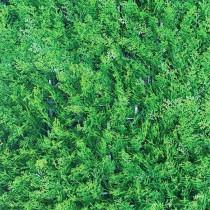 Mur Végétal Artificiel Thuya 40 mm 1m x 1m